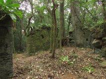 skogen fördärvar Arkivbilder