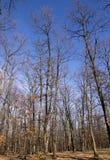 Skogen fjädrar in Arkivbild