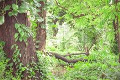 Skogen fyllde med träd och grön vegetation lite varstans Fotografering för Bildbyråer