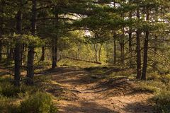 skogen går Arkivbilder