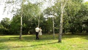 skogen går stock video