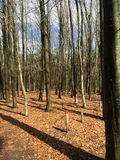 Skogen går Royaltyfri Bild