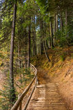 Skogen går i höst Royaltyfria Bilder