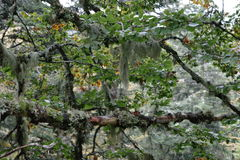Skogen i Frankrike Arkivbild