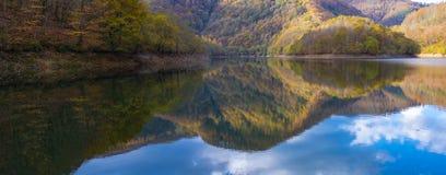 Skogen i höst reflekteras i den Endara behållaren arkivfoto