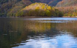Skogen i höst reflekteras i den Endara behållaren arkivbild