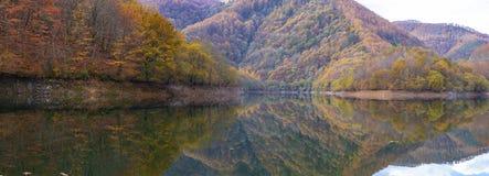 Skogen i höst reflekteras i den Endara behållaren arkivfoton