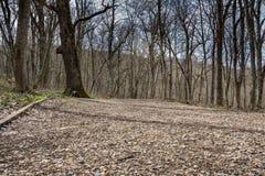 Skogen i parkera på berget i våren, barn gräs och blommor, torra filialer arkivfoto