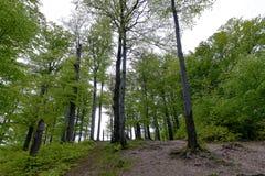 Skogen i Polyanitsky parkerar Arkivfoto