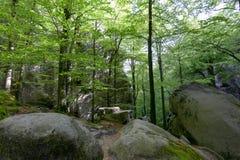 Skogen i Polyanitsky parkerar Royaltyfri Bild