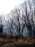 Skogen i röken Fotografering för Bildbyråer