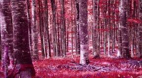 Skogen i rött i aftonen royaltyfri foto