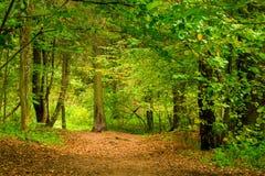 Skogen i September, tjocka lövfällande träd står royaltyfria bilder