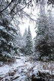 Skogen i vinter är en bra tid för turism royaltyfria bilder