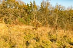 Skogen i Watzdorf thuringia Royaltyfri Bild