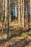 Skogen i Watzdorf thuringia Royaltyfri Fotografi