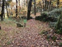 Skogen kallade Fraga de Catasos i Galicia nordvästliga Spanien fotografering för bildbyråer