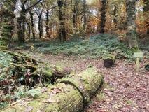 Skogen kallade Fraga de Catasos i Galicia nordvästliga Spanien royaltyfria bilder
