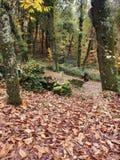 Skogen kallade Fraga de Catasos i Galicia nordvästliga Spanien arkivfoton