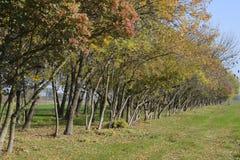Skogen längs vägen i nedgången Gulna sidor på filialerna Arkivfoto