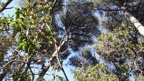 Skogen med cikadorna arkivfilmer