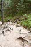 Skogen nära fördärvar av Valdstejn den gotiska slotten Arkivbilder