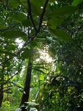 Skogen nära mitt hus fotografering för bildbyråer
