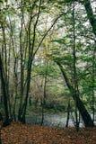 Skogen och floden Royaltyfri Fotografi