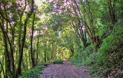 Skogen på ön av linden gömma i handflatan Royaltyfri Fotografi
