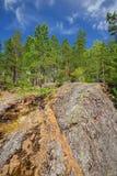 Skogen på granit vaggar och kanjoner Royaltyfri Fotografi