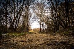 Skogen parkerar in arkivfoto