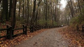 Skogen/parkerar höst efter regnet väg för skogkohmak Folk som går i bakgrunden Statisk elektricitetskott lager videofilmer
