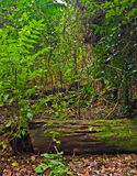skogen planterar regntrees arkivbild