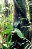 skogen planterar tropiskt Royaltyfri Fotografi