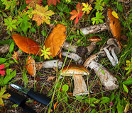 Skogen plocka svamp i gräset Arkivbilder