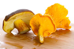 Skogen plocka svamp ingredienser för matlagning Royaltyfri Foto