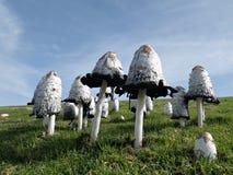 skogen plocka svamp litet Fotografering för Bildbyråer