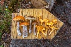 Skogen plocka svamp på ett träbräde Royaltyfria Foton