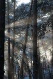 skogen rays sunen Royaltyfri Foto