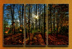 skogen rays sunen arkivbilder