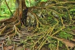 skogen rotar treen Royaltyfri Bild