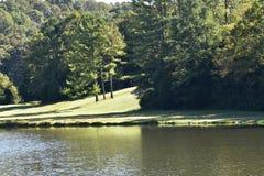 Skogen runt om en sjö, som vänder gräsplan, simulerade skogen Royaltyfri Bild