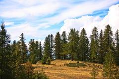 skogen sörjer Fotografering för Bildbyråer