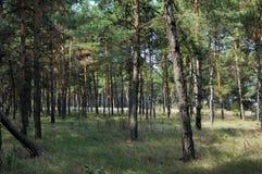 skogen sörjer Arkivbilder