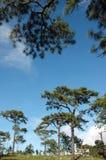 skogen sörjer Royaltyfri Foto
