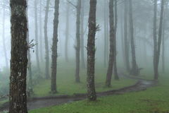 skogen sörjer Royaltyfria Foton