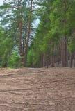skogen sörjer Royaltyfri Bild