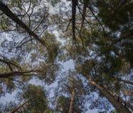 Skogen sörjer blast Fotografering för Bildbyråer