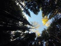skogen sörjer den övre treen arkivbilder