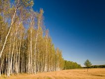 skogen sörjer den små treen Royaltyfri Bild